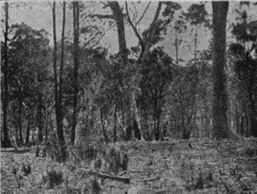 Site of Kelly's camp (log hut) on the bank of Kelly's Creek.