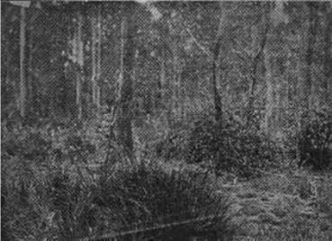 Site of Police Camp on Stringybark Creek, where the police were shot by the Kellys, Oct. 26th, 1878.