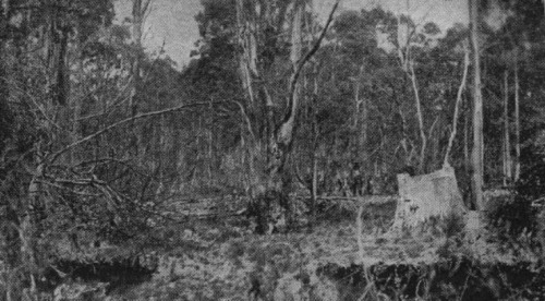 Man in background shows the position of Sergeant Kennedy when shot by Ned Kelly from behind the stump in the foreground.